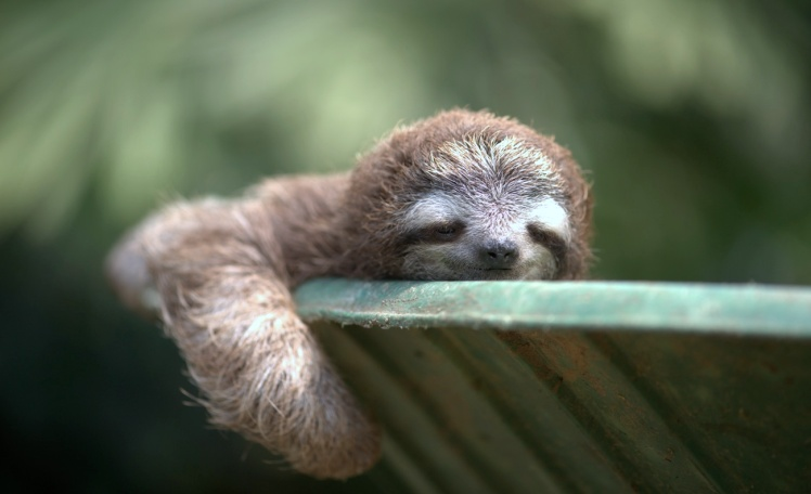 sleepy-sloth-1300x793
